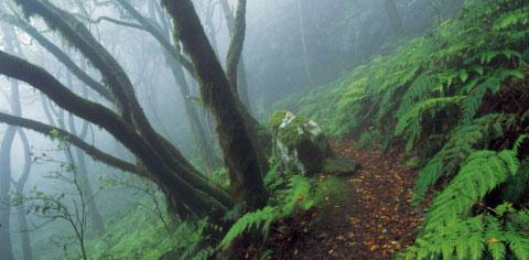 La bruma caracteriza el paisaje de la laurisilva