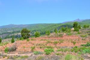 Cultivos en jable, Granadilla