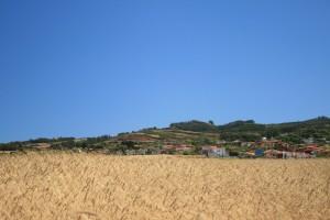 Cultivo de cereales, El Rosario