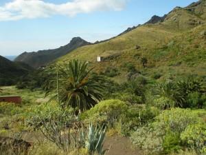 Barranco de Santos, Santa Cruz de Tenerife