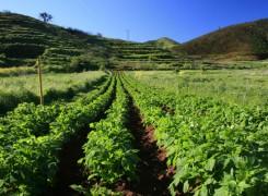 El Cabildo valora el potencial del paisaje agrario como recurso turístico